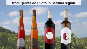 NEW IN STORE: The Kamikazes and Muscats from Quinta do Piloto in Setúbal region