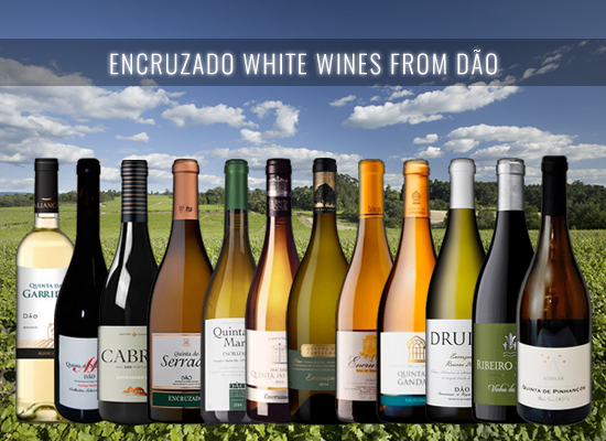 The Dão Encruzado white wines are a good alternative for the French Burgundy or the Italian Vermentino
