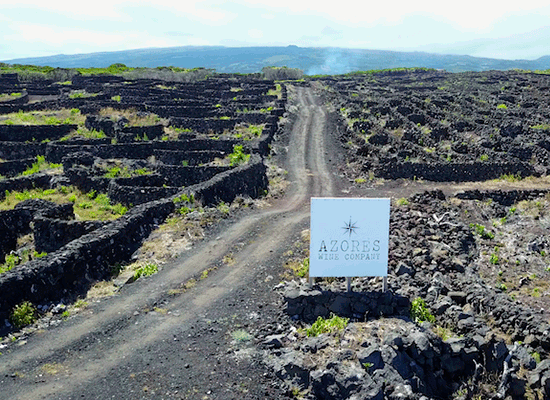 The new releases from Azores Wine Company with 11% OFF